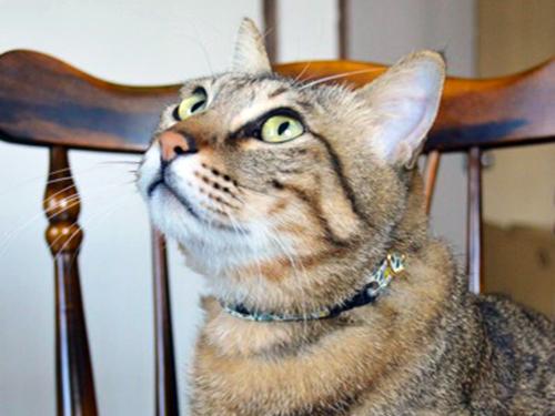 猫の首輪3